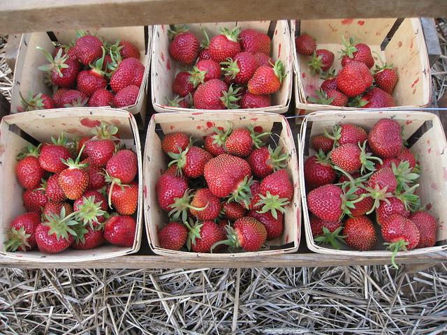 strawberryday2014c