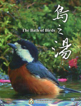 鳥兒愛乾淨嗎?他們會怎麼洗澡呢?
