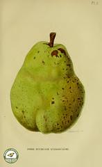 yellow, pear, green, fruit, food,