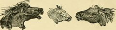 """Image from page 25 of """"The standard horse book, comprising the taming, controlling and education of unbroken and vicious horses"""" (1895)"""