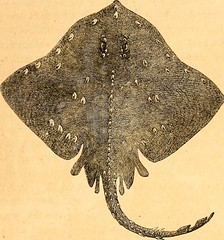 "Image from page 476 of ""Peter Parley's kaleidoscope : or, Parlor pleasure book : consisting of gleanings from many fields of the curious, the beautiful, and the wonderful"" (1859)"