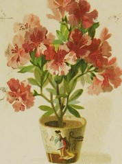 """Image from page 10 of """"The Artistic language of flowers"""" (1888)"""