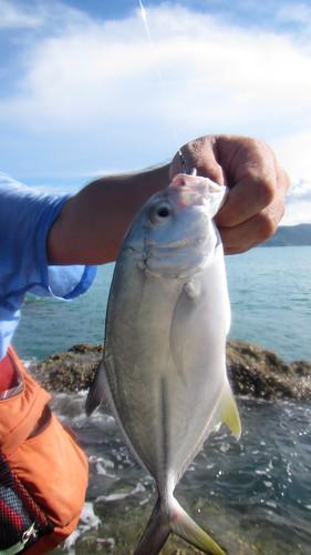 Koh Samui - Fishing サムイ島メッキ釣り