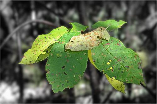 green nature leaf sweden schweden natur swedish suede suecia sueco