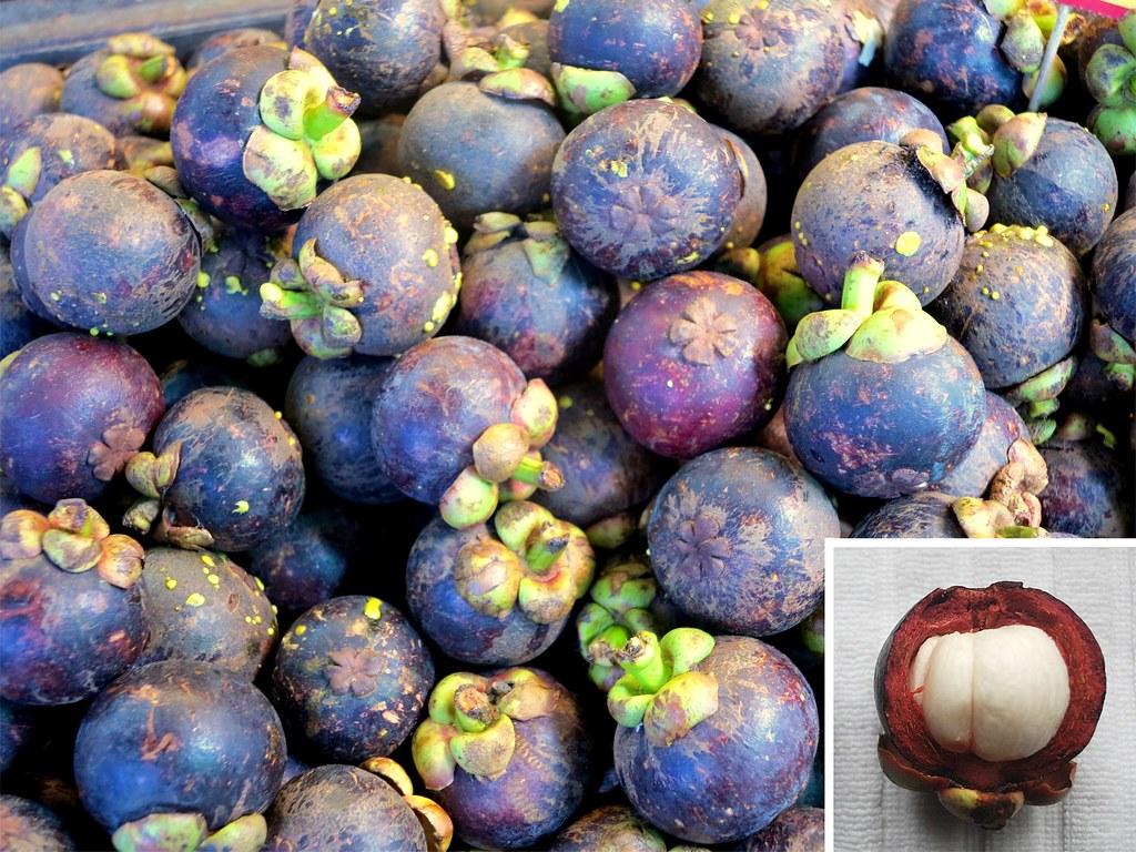 Mangostán, Garcinia mangostana