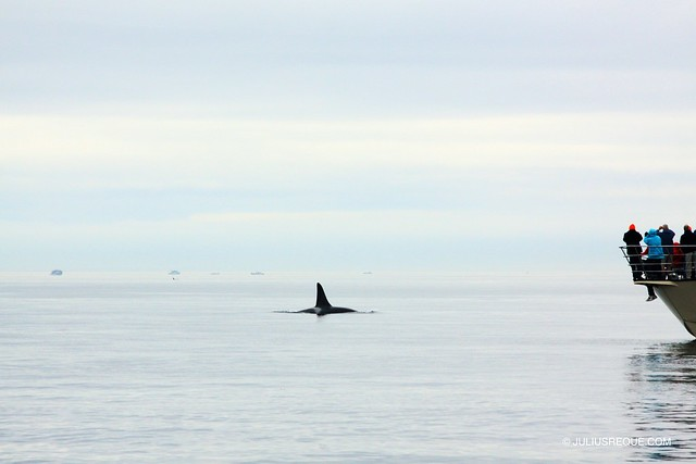 Today in Vancouver: Whale Watching