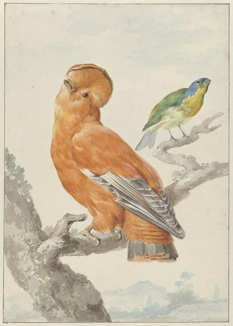 001-Aert Shouman- Rijksmuseum