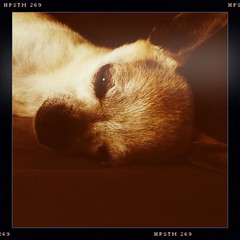 caught napping again #Hipstamatic #KaimalMarkII #Pistil