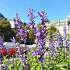 Hanging out with the September flowers,  #Paris.