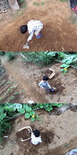 自分撮りスティック作例:上から撮影。スコップで土遊びするとらちゃん。