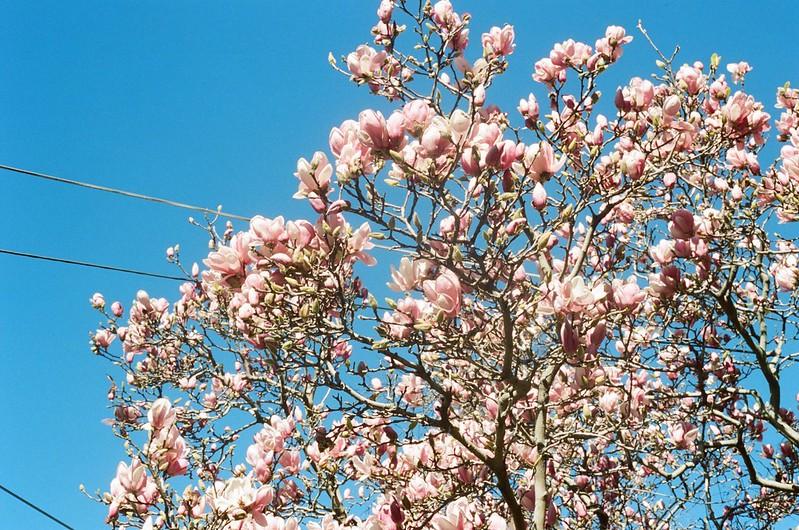 Spring in Sydney