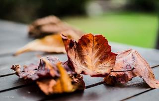 Autumn Leaves (Again!!)