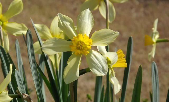 Sunshine With Petals, Fujifilm FinePix S4080