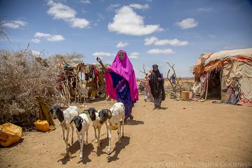 Somaliland_Mar17_2247