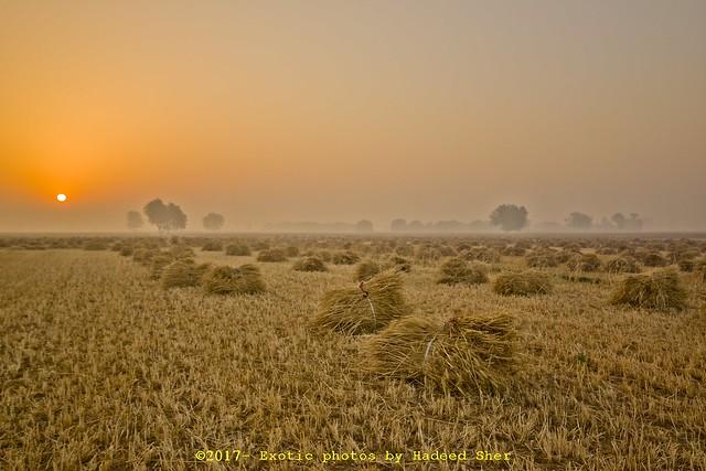 Colors of Punjab