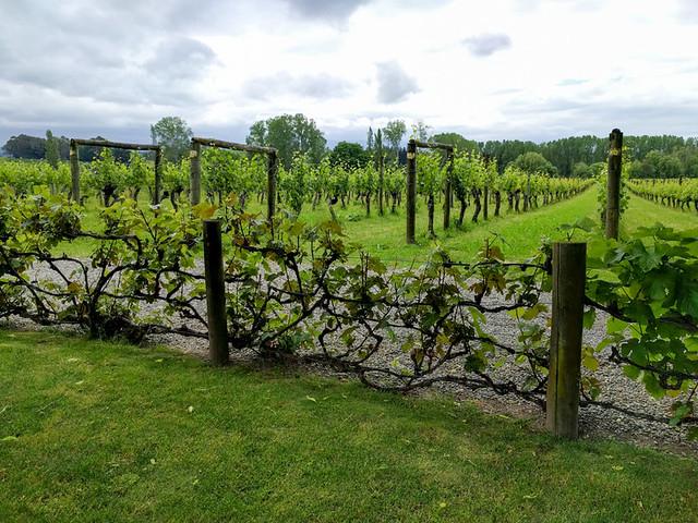 Neudorf Vineyards