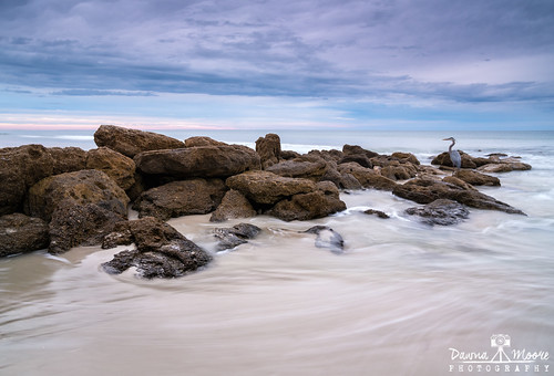 blue fl florida photography relaxation serene washingtonoaksgardensstatepark atlanticocean beach bird blueheron coast coastal coastline coquinabeachrocks coquinabeachrocksmarineland coquinabeachrockswashingtonoaks coquinarock coquinarockbeach dawnamoorephotography dawnamoorephotographycom image landscape longexposure marineland nature ocean palmcoast peace peaceful photo photograph picture pink purple relaxing rock rocks sand sea seascape serenity silkywater travel washingtonoaks waves unitedstates us