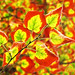 Otoño / Autumn by LeonCalquin (2)