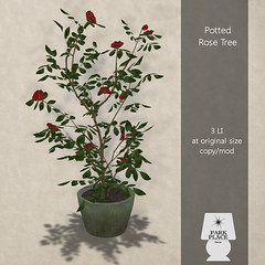[Park Place] Potted Rose Tree