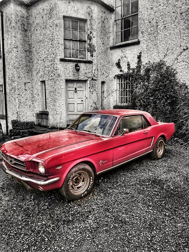 Mustang at Bellurgan Park