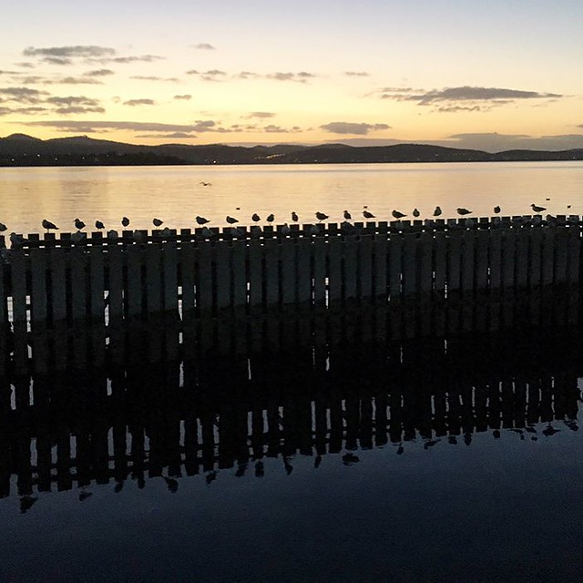 097/365 • pretty sad to leave Hobart behind this morning ? - the birds and rowers saw us slink out to see... sorry to miss you @teamtwodogs - glad you came over last night xx • . #hobart #morning #farewell #birds #discovertasmania #tassiestyle #b