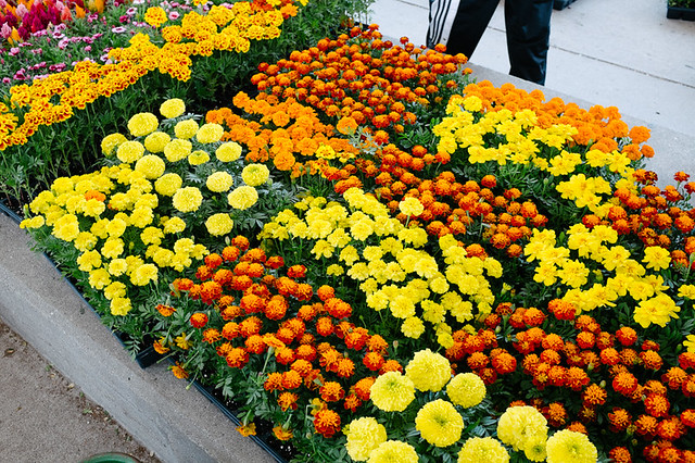 FlowerDay-2
