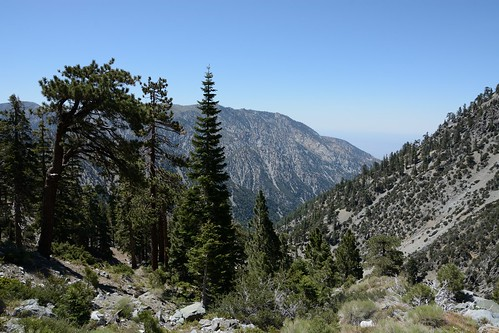 Mt Baldy Ski Hut Trail