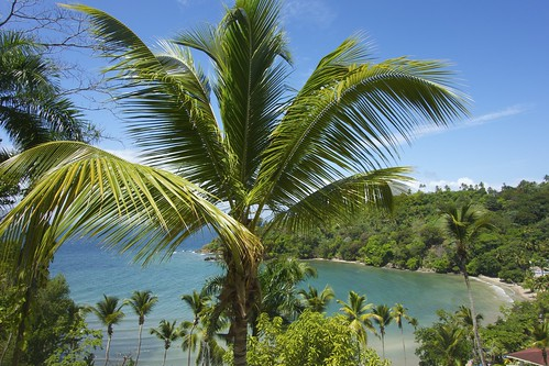 trees landscape palmtrees