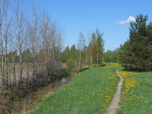 Niittynäkymä, Pohjois-Tapiola Espoo 22.5.2014
