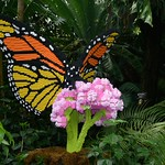 Missouri Botanical Garden Legos 2014 096