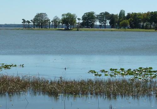 lake nature water florida foliage leesburg harris absolutelystunningscapes alittlebeauty