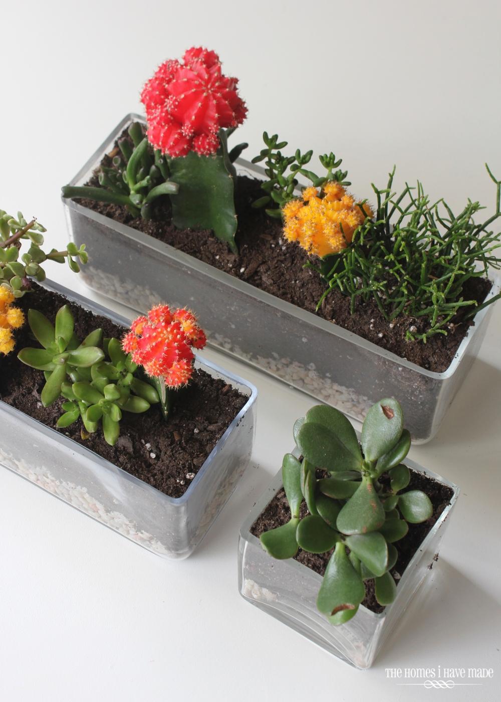 Succulents-001