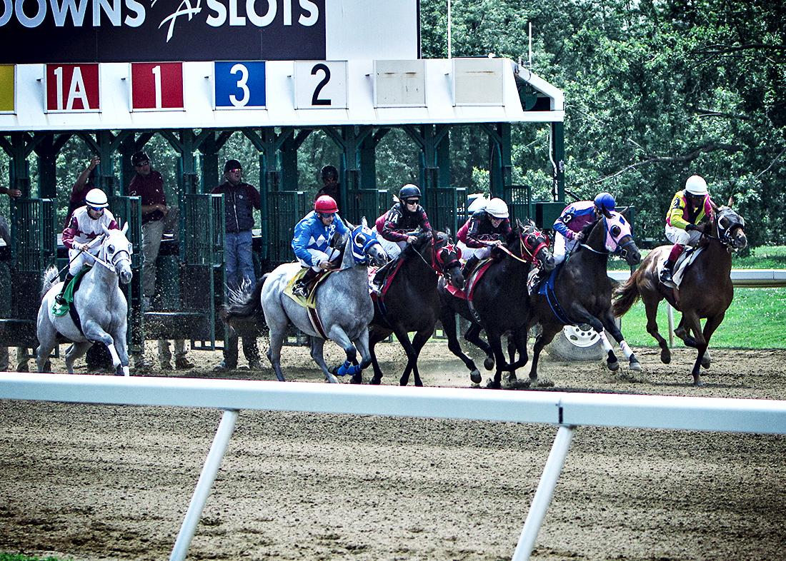 Quarter horse Images and Stock Photos 736 Quarter horse