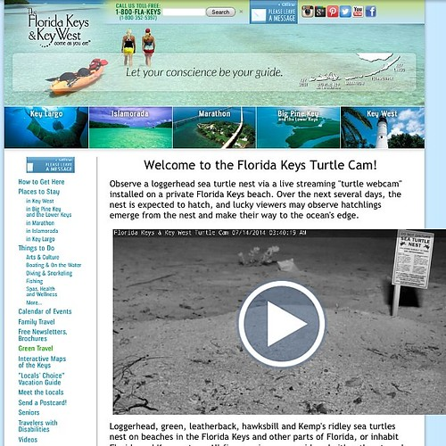 For turtle lovers: www.fla-keys.com/turtlecam
