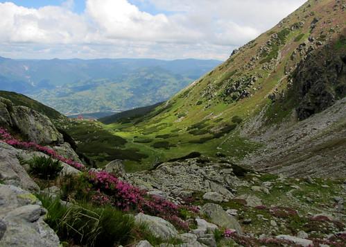 summer mountains hike hegy mountaintrail nyár túra radnaihavasok maramureș máramaros canonpowershotsx20is hegyiösvény tothepietrosulrodneipeak munțiirodnei anagypietroszcsúcsfelé