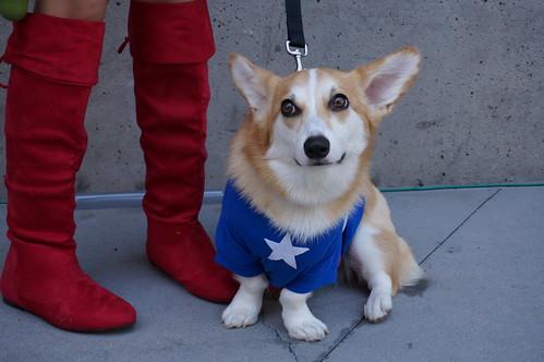 Captain America Dog