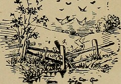 """Image from page 220 of """"Bird lore"""" (1899)"""