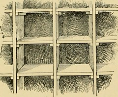 """Image from page 121 of """"The national standard squab book"""" (1909)"""