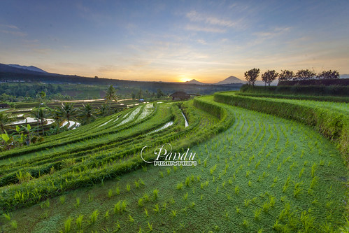 bali green sunrise indonesia landscape photography tour rice paddy guide ricefield jatiluwih tabanan baliphotography balitravelphotography baliphotographytour baliphotographyguide