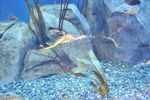 17_Georgia Aquarium