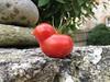 Twitter tomato