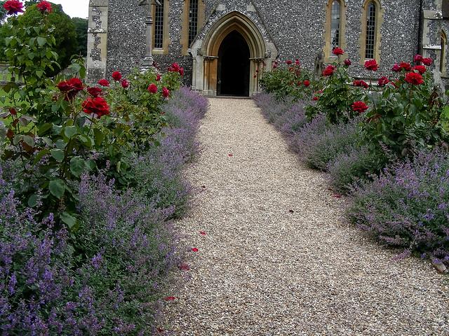 Jdy190 bpl lavendula rosa epl bgr3egr blo uk englefield St mark s church englefield
