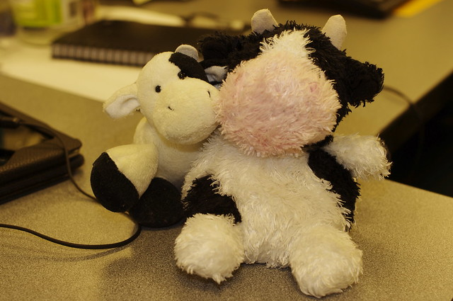 Naughty cows