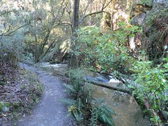 2014-08-10 Lilydale Falls 067 - Track gravel