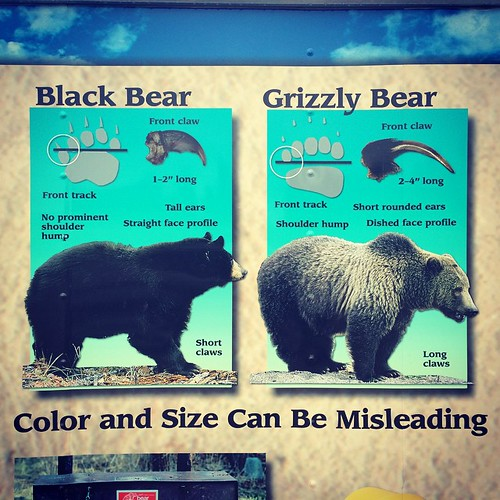 Tell me about it, Bear awareness display.