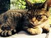 My pretty kitty Miss Pebbles