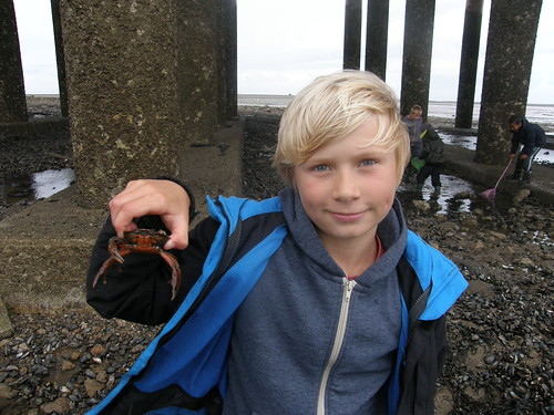 B with shore crab