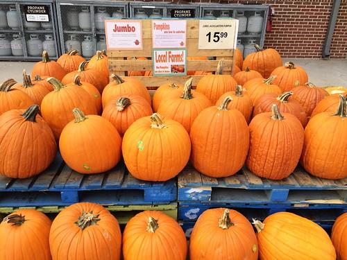 Market Street Pumpkin Patch