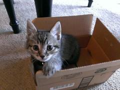 Kitten's first Heisenberg quantum pic.