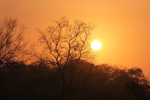 africa morning trees light red orange sunlight holiday tree sunrise canon southafrica golden glow branches earlymorning silhouettes orb september safari krugernationalpark mpumalanga kruger gamedrive 2014 sabiepark canon60d glendahall